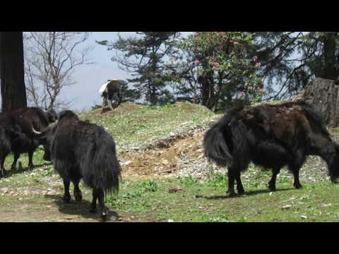 NEW CONCEPTS IN TRAVEL WebSeries BHUTAN (Premiere Episode)