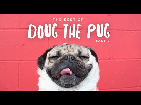 Best Of Doug The Pug - Part 2