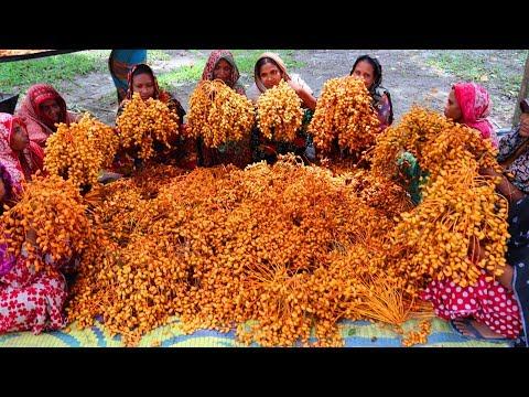 Local Date Transform Into Tasty Sweet - Unusual Food - Date Sweet Making By Village Women