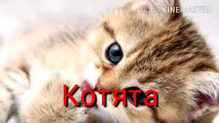 Котята-это жизнь! Видео от которого хочется плакать!