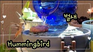 또 다른 취미~ 새멍(벌새) Hummingbird