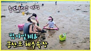 [충남 태안] 몽산포 해수욕장 및 팜카밀레