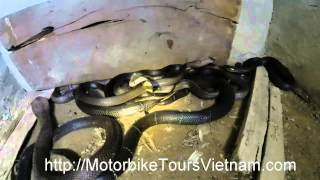 Snake farm in Vietnam Motorbike tours