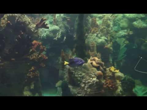 coralseafish