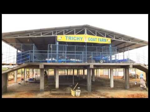 Trichy goat farm youtube Home palan