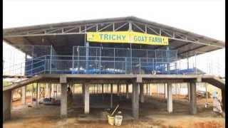 Trichy Goat Farm