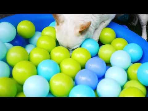 Cats fishing 4k UHD