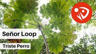 Señor Loop - Triste Perro (Audio Oficial)