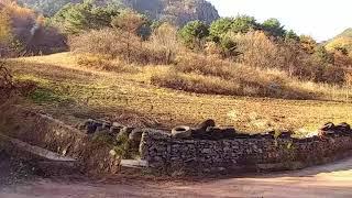 삼척 도계  농바우 계곡   이런곳이  숨어  있었다니  ?