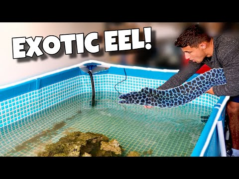 My NEW EXOTIC EEL For My POOL POND!!