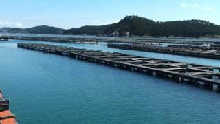 Korea breeding nursery farm of Abalone