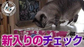 【Jean & Pont 704】ジャン君があんずちゃんのケージをチェック 2017/10/27 保護猫育成記録  Jean & Pont thumbnail