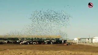 видео отпугиватель птиц