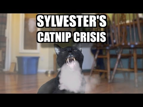 Talking Kitty Cat 61: Sylvester's Catnip Crisis