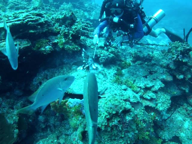Feeding a Moray eel