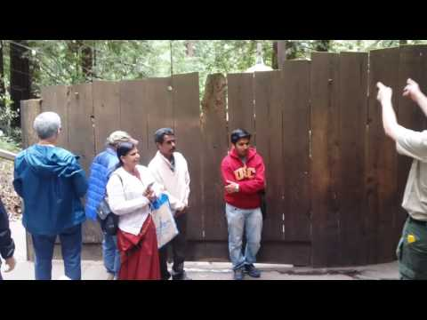 MYSTERY SPOT with tour guide Jack at Santa Cruz, California