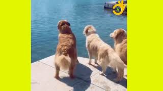 Animals Funny Video   Viral Videos   Funny Videos   Emboss Funtime