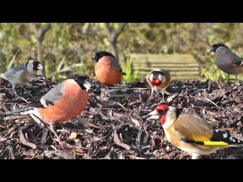 Videos For Cats To Watch Birds - Bird Table Wonderland