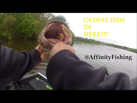 Ancient 5.5 LB Bass On Congers Lake (HEAVY RAIN)