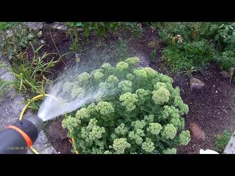 Garten Bewässerungs Arbeiten Gartenbewässerung 03-09-2018