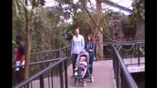 Поход с семьей в зоопарк