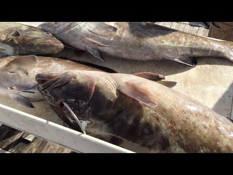 12 18 14 delray beach fishing report large gag grouper for Delray beach fishing