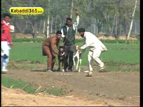 (1) Gholia Khurd ( Moga) Dog Raing 13 Dec 2015