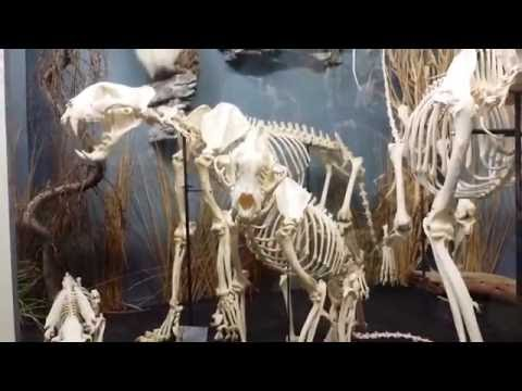 Adventure To The Museum of Osteology