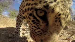 Kruger Wildlife Compilation HD - Heartbeat of the Timbavati 3