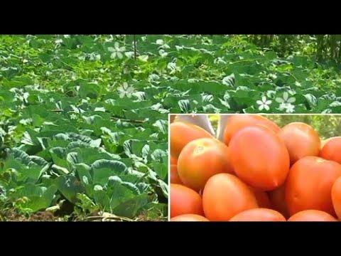 Kiambu Agriculture