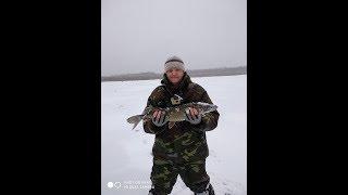 Рыбалка на жерлицы ,при хорошем клёве.Первый лёд ч.2.Беларусь.