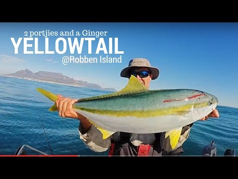 Yellowtail fishing in South Africa