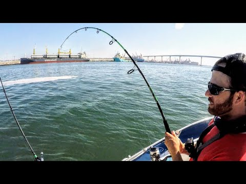 Fishing For Halibut Using Big Live Bait!(San Diego Bay)