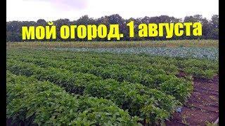 Перец, Хризантема, Капуста, Баклажан - полный обзор огорода.