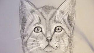 Come disegnare un gatto imazi for Disegno gatto facile