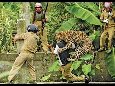 Leopard Attacks Tourist
