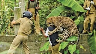 Leopard Attacks Tourist
