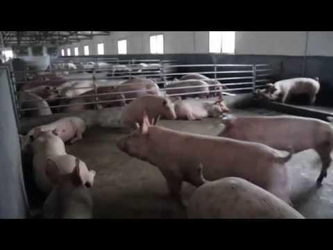 FARMAGEDDON -- CHINA