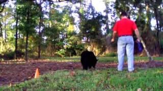 Dog Training: Basic Tracking