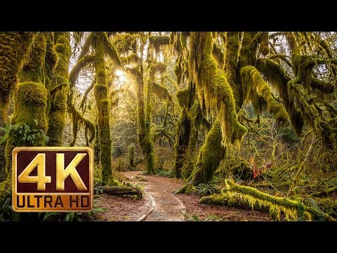 Thumbnail: 4K, Hoh Rain Forest - Nature Relaxation Video