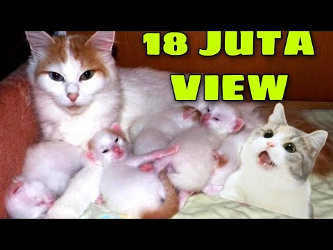 persalinan normal 3 anak kucing lucu