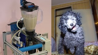 Automatic dog feeder for dog with megaesophagus DIY