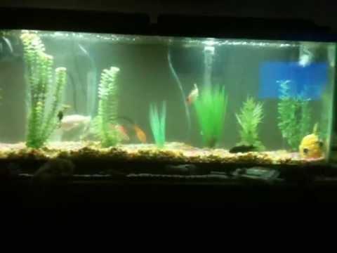 55 gallon aquarium under gravel filter youtube for 55 gallon fish tank setup