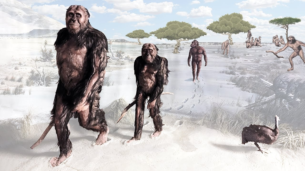 maturation of australopithecus The biological and chronological maturation of early hominids recent studies on the rate and pattern of dental development indicate that the growth and maturation of early hominids were more similar to the extant apes than to modern humans.