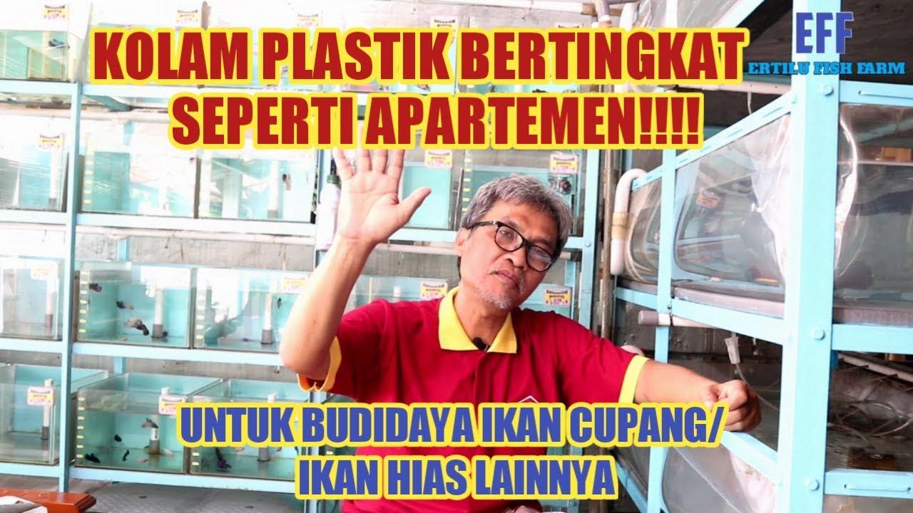 Kolam Plastik Bertingkat Seperti Apartemen, Untuk Budidaya ...