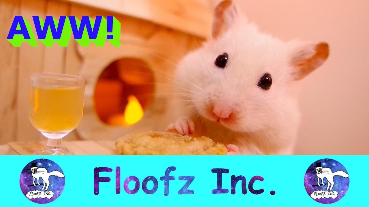 Hamster video.com