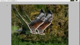 Paint.net видеоурок 7 (объект в движении, размытие)