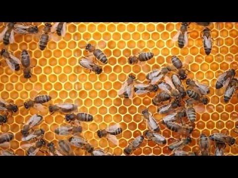 Sustainability Heroes - Junie Snider, Mo-Honey Beekeeper