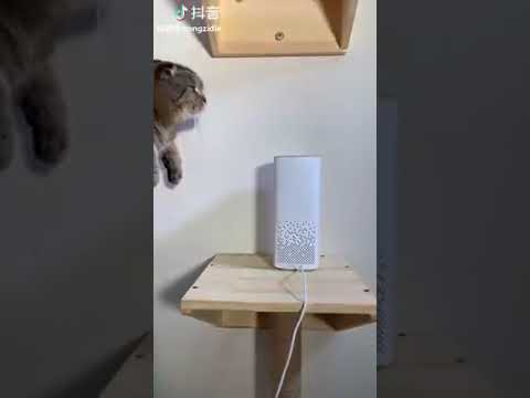 Cat Series: Cat's weird interaction with music
