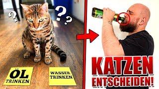 1 Tag entscheiden unsere Katzen alles!